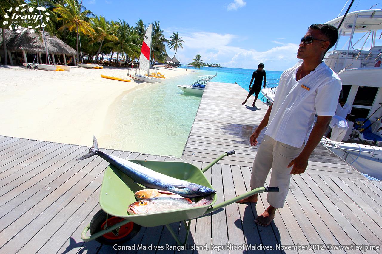 Cá tươi vừa được đánh bắt tại  Conrad Maldives Rangali Resort.