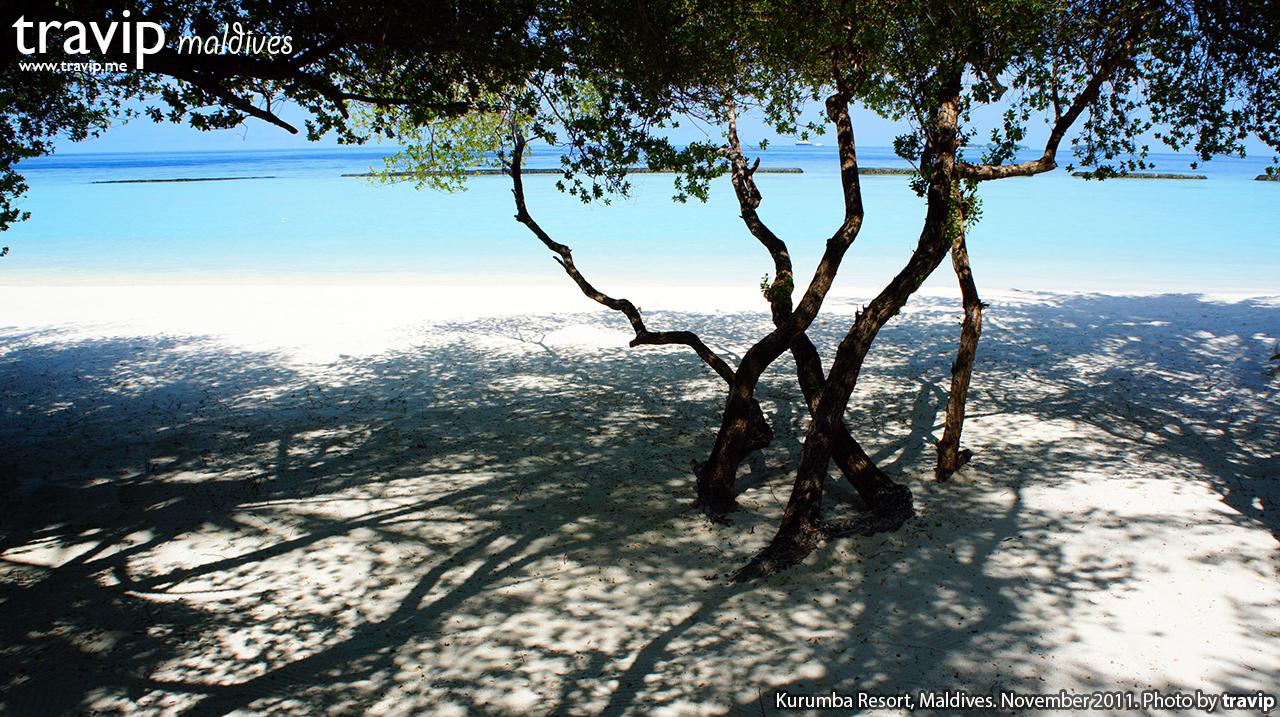 Bãi biển rợp bóng cây ở resort Kurumba.