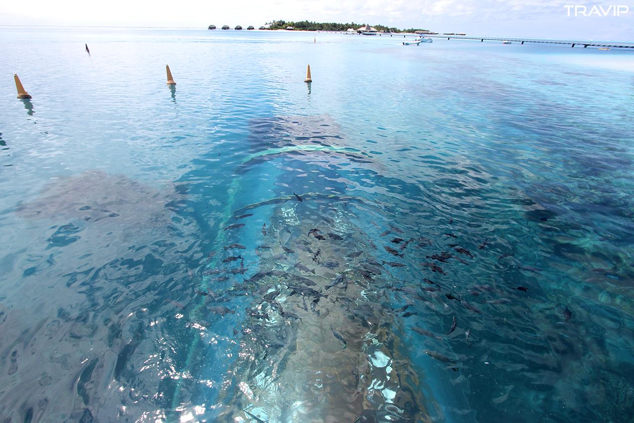 Ithaa nhìn qua mặt nước biển.
