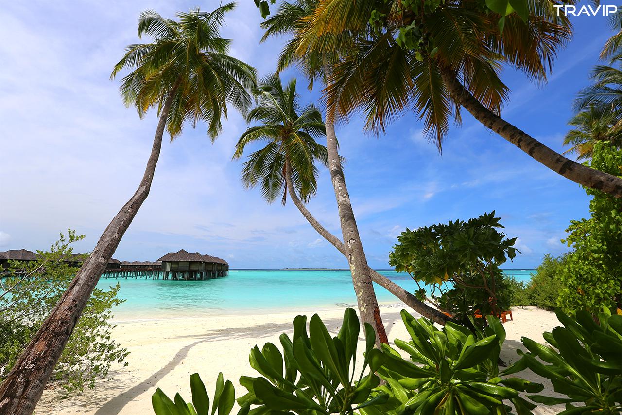 Bãi biển trên đảo Iru Fushi ở Maldives vào mùa thấp điểm với chút nắng rực rỡ trước khi trời đổ mưa về chiều. Theo các bạn, yếu tố nào tạo nên một bãi biển đẹp? Nước xanh, cát trắng, những cây dừa cong veo, bãi biển vắng, mức độ sạch sẽ hay điều gì khác?