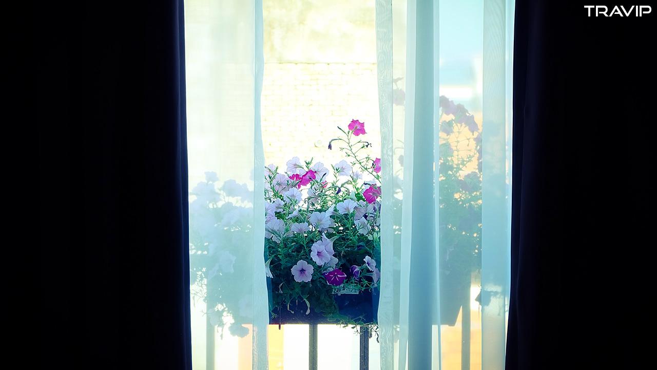 Phòng có ban công và chậu hoa tuyệt đẹp.
