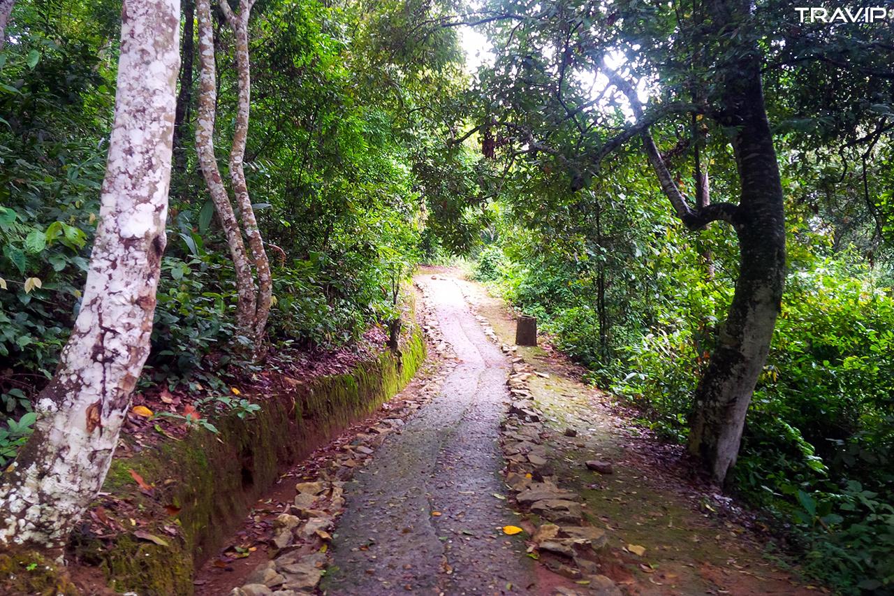 Con đường dẫn vào Sở chỉ huy chiến dịch Điện Biên Phủ.